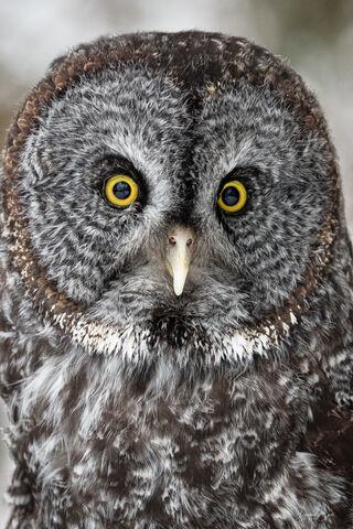 XYZ Owl